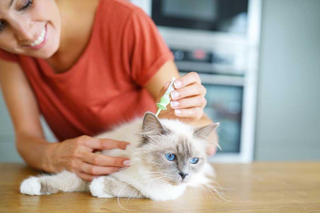 Wenn Katze Flöhe hat