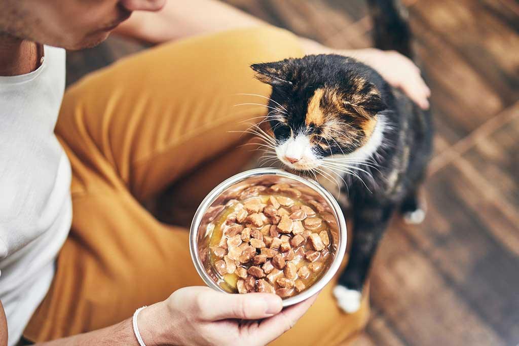 Katze Füttern: so machen Sie es richtig