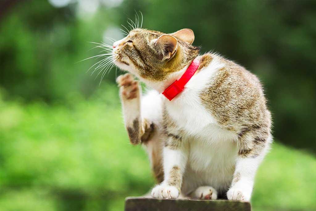 Effektive Maßnahmen wenn Katze  Flöhe hat